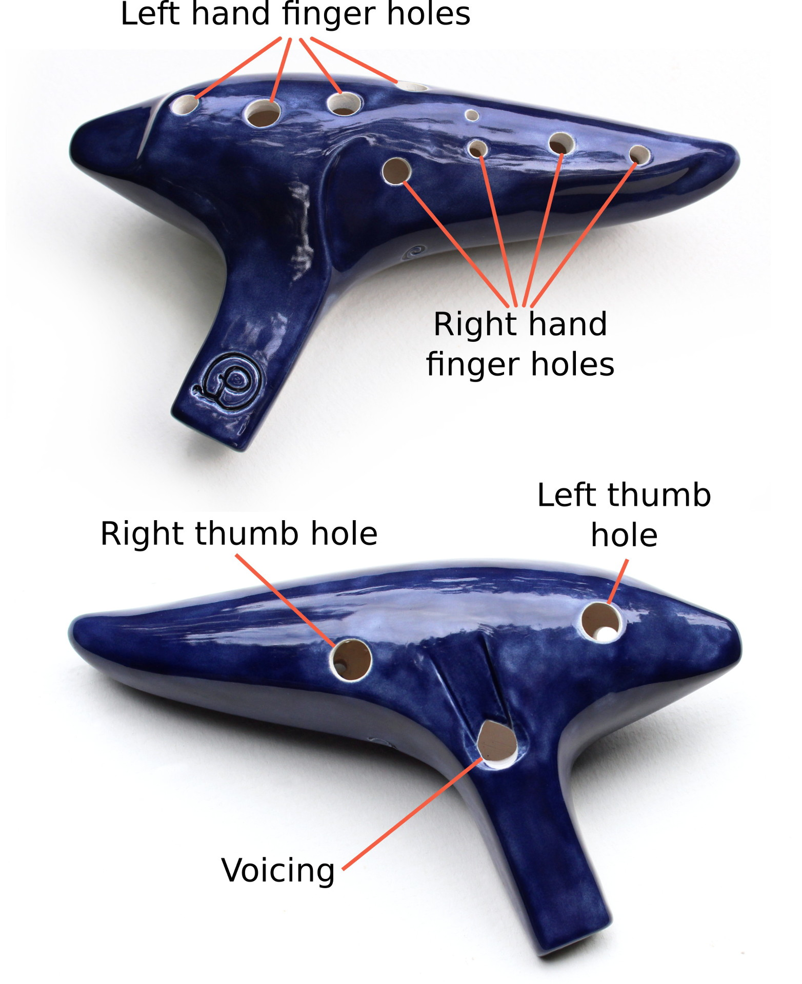 A diagram showing the physical layout of an ocarina. An ocarina is a cone shaped object with a mouthpiece on the side about a 3rd from the left hand end. Viewed from the top, there are for finger holes for the left hand on the left side of the code and four holes for the right had on the right hand side of the cone. On the bottom of the instrument are holes for the left and right thumb, and the voicing is located between them. The voicing is where sound is produced, and is never covered while playing